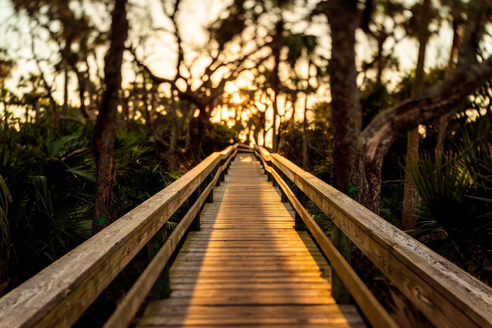 A walkway to the beach in Hanna Park Jacksonville Florida