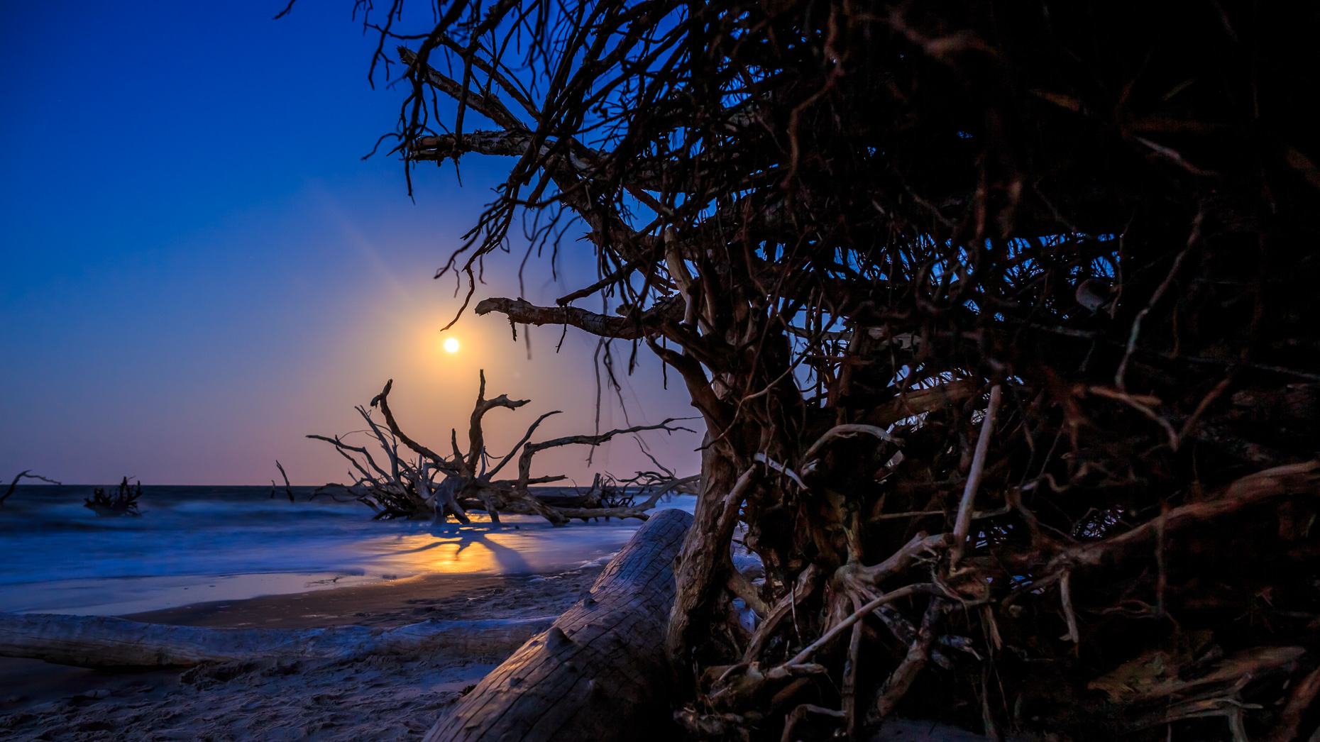 The full moon rises over the trees on Big Talbot Island Florida